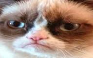 grumpycatstrikes-pv