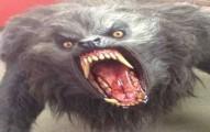 werewolf-cat-pv