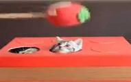 kittenwhacamole-pv