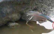 birdusesbait-pv
