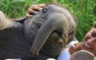 babyelephant-pv