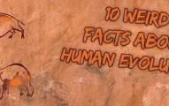 factsevo-pv