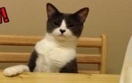 catbegs-pv