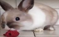 bunnyraspbry-pv