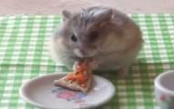 hamsterpizza-pv