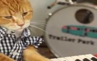 keyboardcat-pv