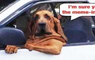 dogcatmemes1-pv