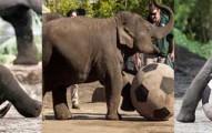 elephantssoccer-pv