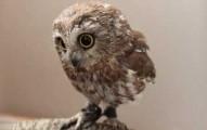 owlwhisper-pv