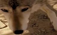 wolfsanctcontest-pv