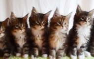 7kittensdiscover-pv