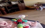 dogapologybaby-pv