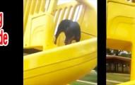 dogsdownslide-pv