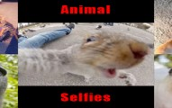 animalselfies-pv