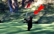 beargolfcourse-pv