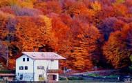 fallcolors-pv