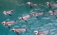 penguinaerobicsclass-pv