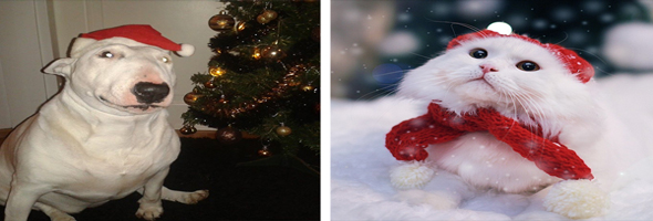 christmassongsdogcat-pv