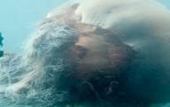 newgiantjellyfish-pv