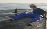 sharkstudy-pv