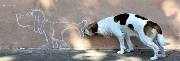 perfectly-timed-dog-pics-pv