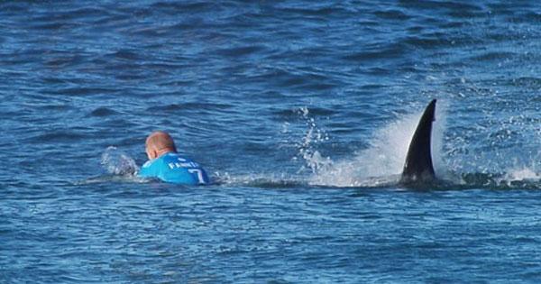 shark attack j-bay