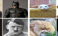 cat-alogue-pv