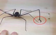 spiderwithclaws-pv